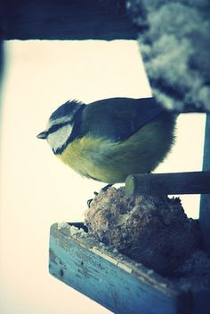 I'm currently obsessed with birds.  By Lazy Dream, via Flickr  https://www.facebook.com/florencesbtphotographie