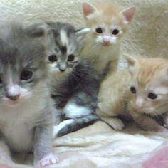 .。*・゚゚ とっても可愛いゆうじろう君のママさん@henrietta.yuから #あんな頃もあったなバトン を いただきました! ありがとうございます(*^-^*) ひだりから… とわ、あおちゃん、さく、つぼ あんな頃もあったなぁと 思い出させてもらえるバトンに 感謝です.。*・゚゚  #私がとりあげた#仔猫#子猫#愛猫#猫#ねこ#ネコ#Cats#猫部屋#猫多頭飼い#猫7匹#猫のいる暮らし#猫と暮らす#猫達との生活#ネコスタグラム#ねこすたぐらむ#ニャンスタグラム#にゃんすたぐらむ#catstagram#にゃんだふるらいふ#猫部#ふわもこ部#猫好きさんと繋がりたい#猫大好き#やっぱり猫が好き