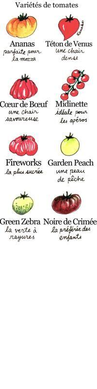 produits du terroir-meilleures tomates france-midinette-tétons de vénus-noire de crimée-fireworks