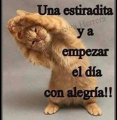 🐣 best memes about grupo whatsapp Funny Spanish Memes, Spanish Quotes, Good Morning Greetings, Good Morning Good Night, Funny Good Morning Quotes, Funny Quotes, Funny Images, Funny Pictures, Good Day Wishes
