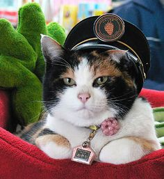 Tama the station officer. Wakayama, Crazy Cat Lady, Crazy Cats, Funy Animals, Cat Dressed Up, Cute Cats Photos, Cat Info, Cat Hat, Cat Costumes