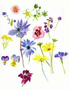 Flowers by Mary Woodin