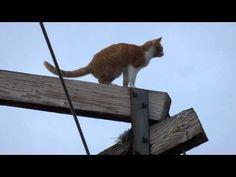 Princeton cat climbs hydro pole, stuck for four days | Globalnews.ca