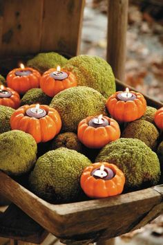 Moss balls and mini pumpkin tealights..add green gourds/pumpkins and mini white pumpkins (delete mini orange) maybe add lrg. white candles.