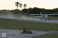 Photographic safaris in the Okavango Delta in Botswana.