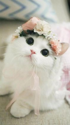 The most adorable th The most adorable thing I have ever seen - Kitties/Puppies - Katzen, Hunde, Tiere Baby Animals Super Cute, Cute Baby Cats, Cute Little Animals, Cute Cats And Kittens, Cute Funny Animals, Kittens Cutest, Cute Dogs, Black Kittens, Cute Fluffy Kittens