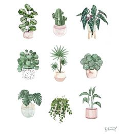 Whether you are a black thumb or a green thumb, houseplants are the best to draw! Plant Painting, Plant Art, Painting & Drawing, Plant Illustration, Botanical Illustration, Watercolor Illustration, Cactus Drawing, Plant Drawing, Watercolor Plants