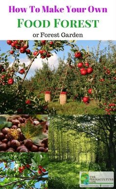Food forests are a concept in permaculture where you produce perennial food crops, instead of annual crops. It's also sometimes known as a forest garden.
