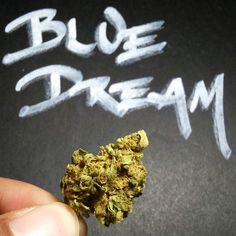 Life is but a Blue Dream // Fire acquired from Underground Meds // The Blue Dream strain review is up at www.TheGreenUnknown.tumblr.com // #420 #cannabis #cannabislovers #cannabiscommunity  #medicate #mmj #medicalmarijuana  #motivatedstoners #staymedicated #weed #marijuana #maryjane #thegreenunknown #strainreviews #stopthestigma #qualitybud #goodganja #hybrid #legalweed #nugs  #grasscity #bluedream #sativa #nugshots #pot #potporn