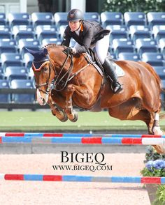Hello! Have you visited Bigeq.com today? Lots of quality Hunter/jumpers listed for sale! This is Vasco & Maria Brugal looking excellent in the high a/o jumpers! #bigeq #hunterjumper #usef #ushja #showjumper #showjumping (at WEF - Winter Equestrian...