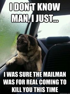 Introspective Pug Is Introspective About Being A Pug