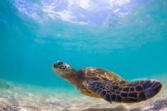 Oahu Activities You Can Do for Free!.. #Hawaii