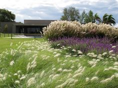What an important group of grasses this is. A stalwart of the naturalistic garden movement in Britain, Europe …