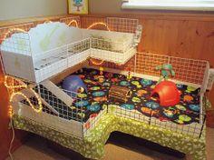 Guinea Pig Cage Ideas Cavy Diy