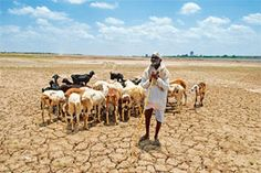 The price the poor farmer in India pays for dependence on Nature