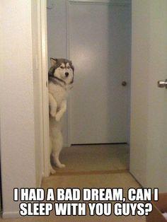 Big puppy had a nightmare