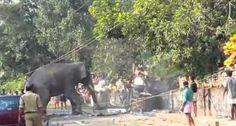Elefante Enraivecido Destrói Rua e Assusta População