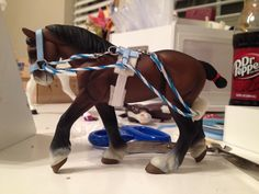 Sweet n' salty tack shop: lunging sets