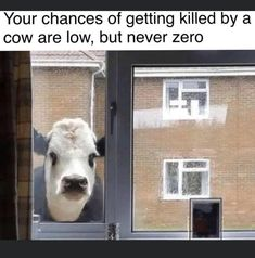 Youre not a baby cow! Funny Animal Memes, Cute Funny Animals, Funny Relatable Memes, Funny Cute, Funny Posts, Stupid Memes, Stupid Funny, Funny Stuff, Rasengan Vs Chidori