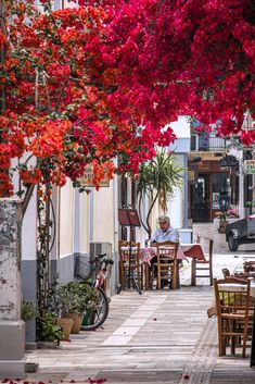 Street tavern and bougainvillea, Nafplio, Greece Roasted Chestnuts, Bougainvillea, Greece, Sidewalk, Street, Flowers, Greece Country, Side Walkway, Walkway