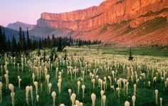 Chinese Wall Bob Marshall Wilderness, Montana