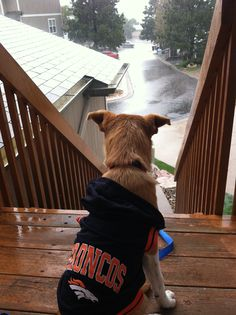 Puppy Peyton watching the rain of the Colorado flood in her Broncos hoodie on the deck safe and sound. Mans Best Friend, Best Friends, Bronco Car, Rain Go Away, Going To Rain, Broncos, Puppy Love, Colorado, Fiber