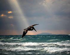 Sea, Air, Light, Bird...
