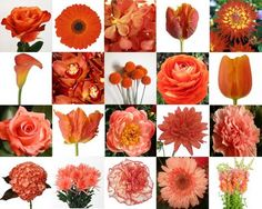 Orange flower ideas here are a bunch of orange and peach flowers!