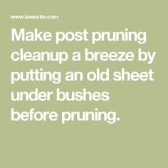 Make post pruning cleanup a breeze by putting an old sheet under bushes before pruning.