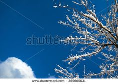 Winter Trees on Blue Sky with Copy Space