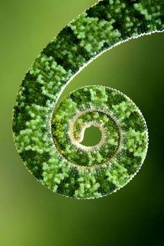 Green - Mehmet Karaca,Chameleon's tail