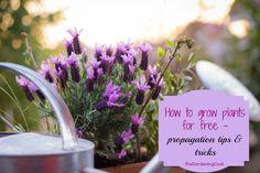 Plant propagation tips - thegardeningcook.com/plant-propagation-tips