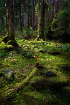 Sol Duc Falls trail, Olympic National Forest, Washington State
