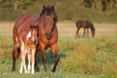 waar leven wilde paarden plaatjes - Yahoo Zoekresultaten van afbeeldingen