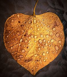 I Love the fresh air in the early am,I Love the Rain and Leaves , Acorns and Pine Cones. Love Them