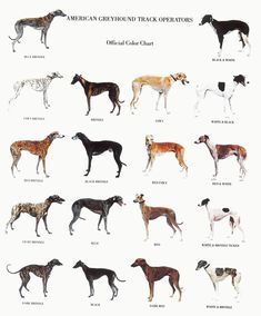 ~ Famous Greyhound owners have included Alexander the Great, George Washington, Rutherford B. Hayes, George Custer, Babe Ruth, Frank Sinatra, Al Capone, Ed Sullivan and Bo Derek