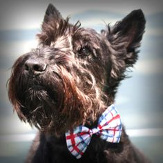 Duffy 4th of July bow tie. I need to get this for Wallace! :)