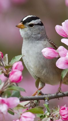 Spring Animal Wallpaper for Desktop 49 images Spring Ani…, - Tiertapete iphone Pretty Birds, Love Birds, Beautiful Birds, Tier Wallpaper, Animal Wallpaper, Bird On Branch, Flower Branch, Spring Animals, Spring Birds