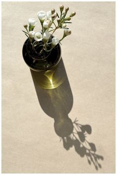 Trendy Ideas flowers photography still life ana rosa Object Photography, Shadow Photography, Modern Photography, Still Life Photography, Artistic Photography, Photography Flowers, Photography Magazine, Digital Photography, Photography Ideas