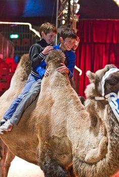 Prince Felix Of Denmark, Alexandra Of Denmark, Royals, Camel, Animals, Animales, Animaux, Camels, Animal