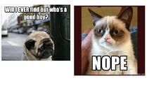 Grumpy Cat answers!