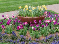 Spring Cleaning for Your Garden : HGTVGardens