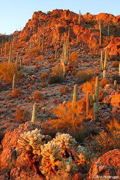 Burn orange.  Sonoran Desert, Tucson Mountain County Park, Arizona, United States.