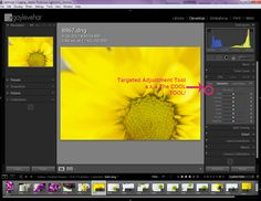Lightroom's Magic Targeted Adjustment Brush | Pretty Presets for Lightroom