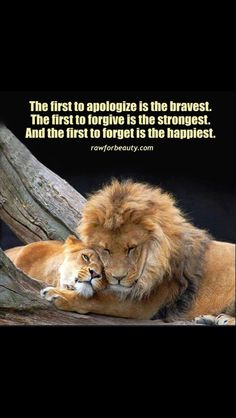 Image outcome for quotes on lions - Pets Wisdom Quotes, True Quotes, Words Quotes, Sayings, Respect Quotes, Lion And Lioness, Lion Of Judah, Lioness Quotes, Lion Couple