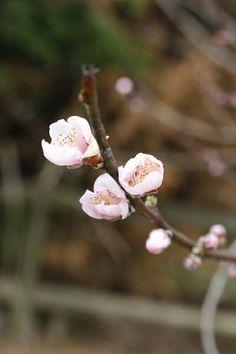 Blossoms. Blossoms, Crown, Jewelry, Flowers, Corona, Jewlery, Jewerly, Schmuck, Jewels