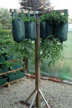 How to Care for Hanging Tomato Plants - Garten Ideen - Anbau Vertical Vegetable Gardens, Backyard Vegetable Gardens, Veg Garden, Tomato Garden, Vegetable Garden Design, Garden Care, Edible Garden, Tomato Tomato, Tomato Planter