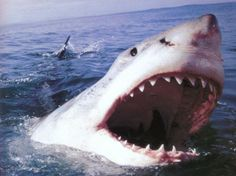 Ecco una lista con 12 specie di squalo da temere se si decide di trascorrere le proprie vacanze in località balneari affollate da questi esseri.