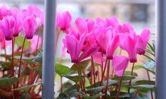 Plantas de otoño para el balcón - Decogarden