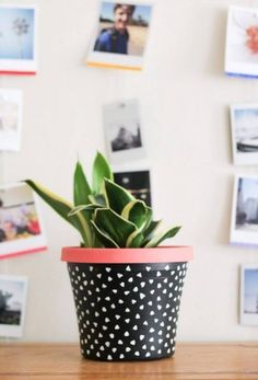 These DIY succulent planter ideas are great to brighten your house, without complicated plant tending and large pots. Painted Plant Pots, Painted Flower Pots, Indoor Planters, Diy Planters, Planter Ideas, Suculentas Diy, Terracotta Flower Pots, Fleurs Diy, Succulent Planter Diy
